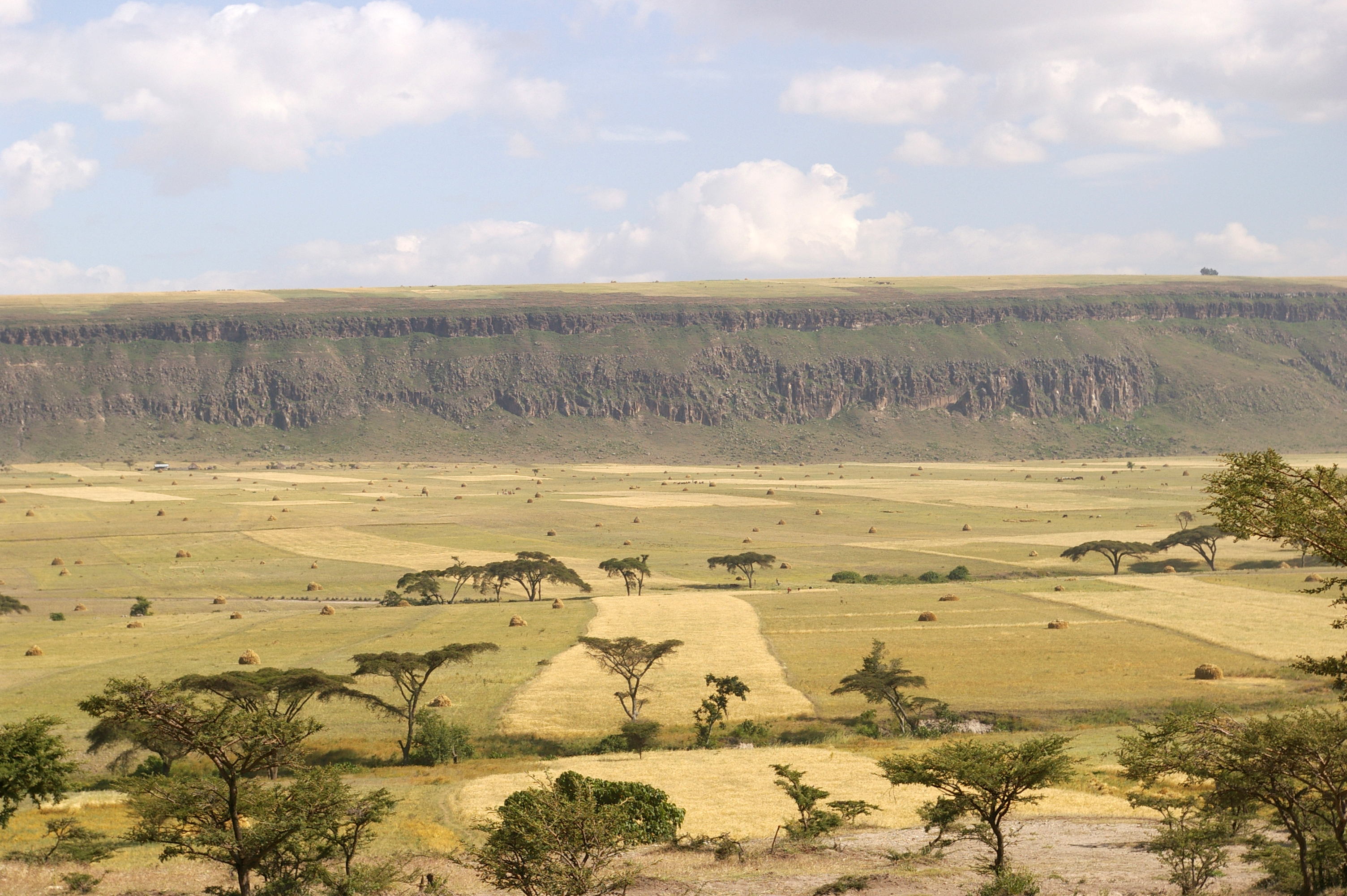 scarpata rift valley golja (etiopia)