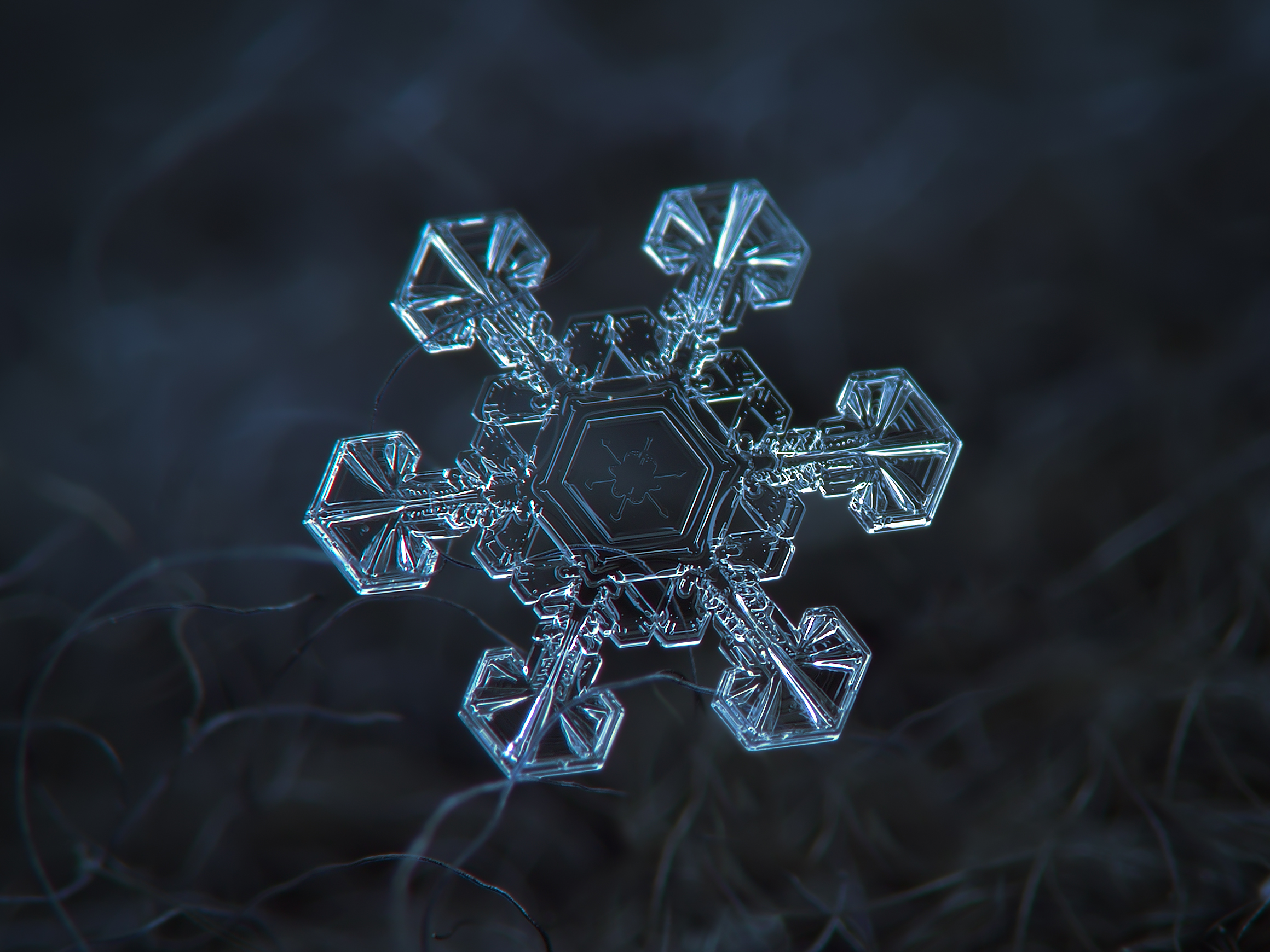 La scienza dei fiocchi di neve (galleria macrofotografica)