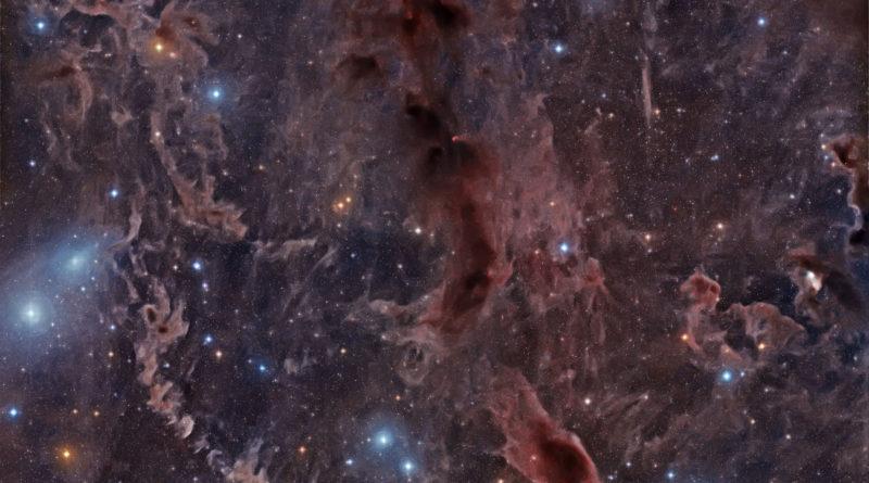Nebulose Oscure attraversano il Toro
