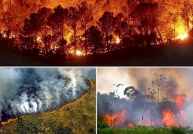 Amazzonia e la chimica del carbonio